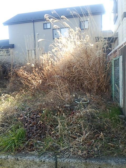 朝霞市の草むしり